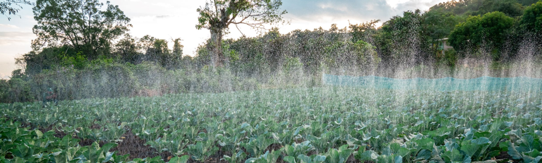 proximity micro irrigation in action